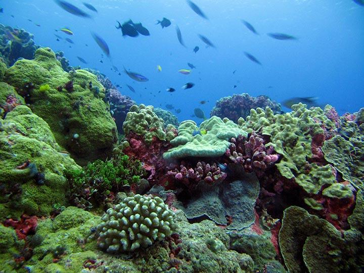 Des simples gestes pour sauver les océans